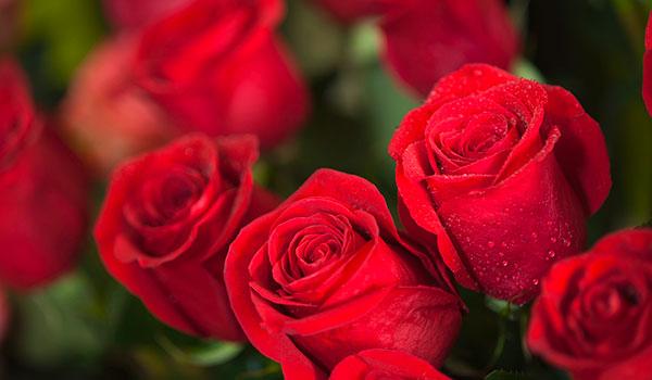 gruber halfing floristik fleurop Floristik