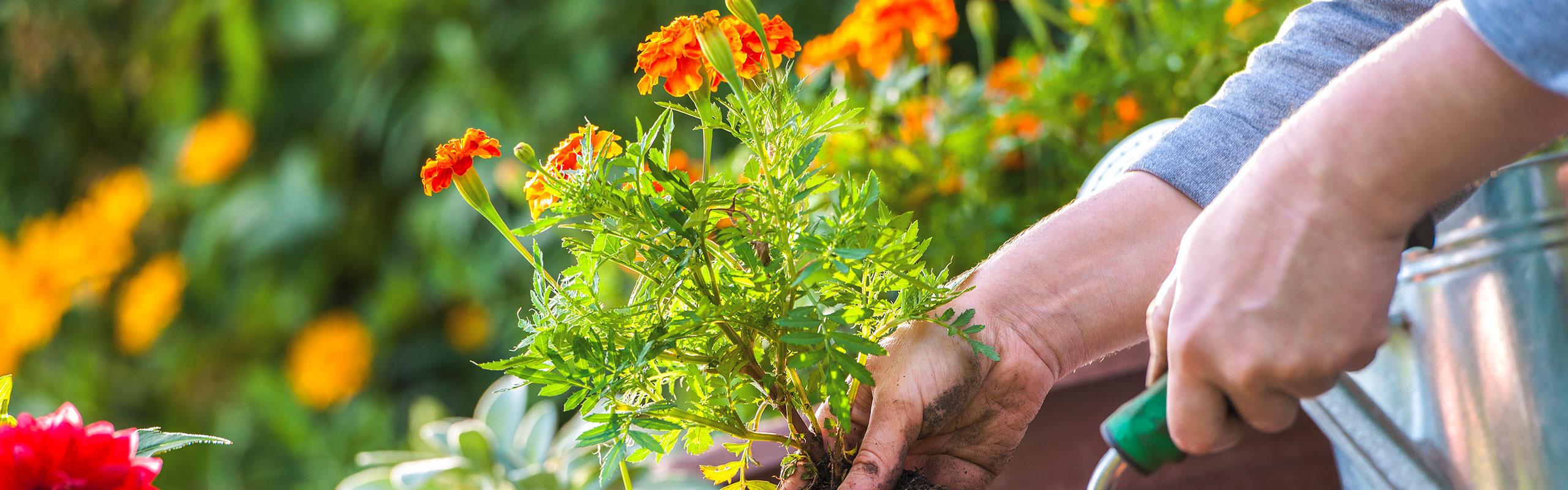 gruber halfing slider dienstleistungen Bepflanzung Dienstleistungen