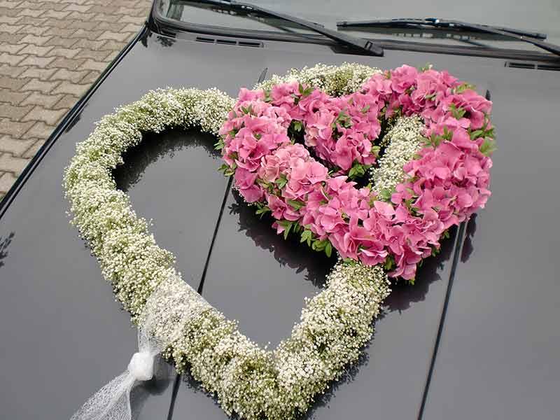 gruber halfing floristik impressionen 10 Impressionen